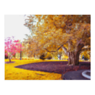 Foliage Postcard