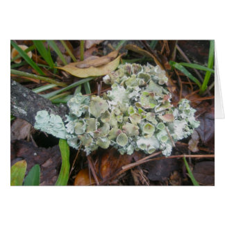 Foliose Lichen OBX Note Card