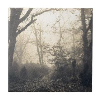 Fontainebleau Forest Tile