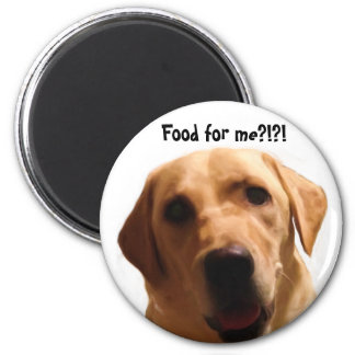 Food for me?!?! | Funny Yellow Lab Magnet