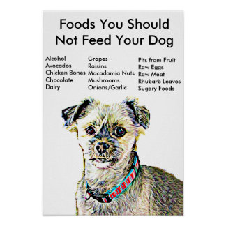 Foods You Should Not Feed Your Dog Poster