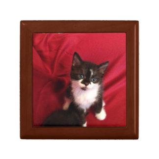 Foofy the kitten with velvet red gift box
