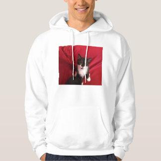 Foofy the kitten with velvet red hoodie