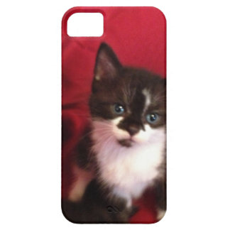 Foofy the kitten with velvet red iPhone 5 cover