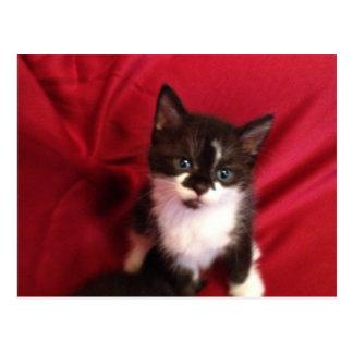 Foofy the kitten with velvet red postcard