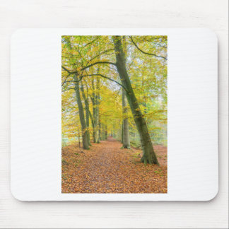 Footpath in forest covered with fallen leaves mouse pad