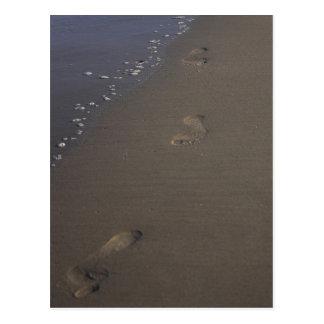 Footprints in the Sand Beach Postcard