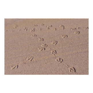 Footprints of seagulls on wet sand poster