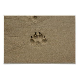 Footstep In Sand At France Poster