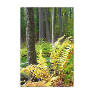 Forest (12 x 18) canvas print
