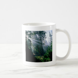 Forest A Wonder In Woods Coffee Mugs