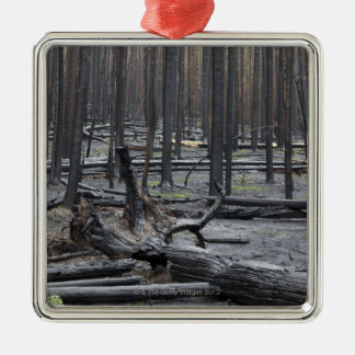 Forest after fire in Yellowstone National Park Metal Ornament