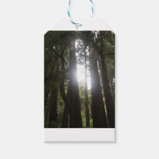 Forest Beauty Gift Tags