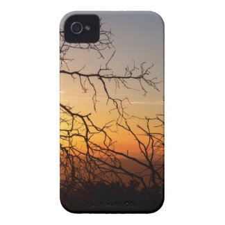 Forest Branches In The Sunset Light iPhone 4 Case-Mate Cases