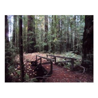 Forest Bridge- Humboldt Redwoods State Park Postcard