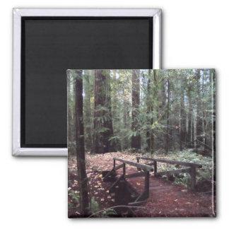 Forest Bridge- Humboldt Redwoods State Park Square Magnet