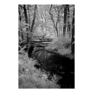 Forest Brook  infrared Poster