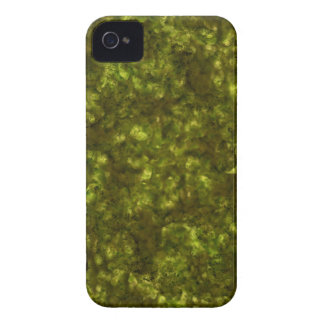 Forest Canopy Eearth iPhone 4 Cases