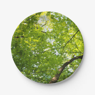 Forest Canopy Paper Plate