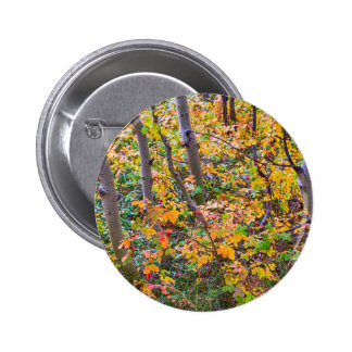 Forest Colors 2 Inch Round Button
