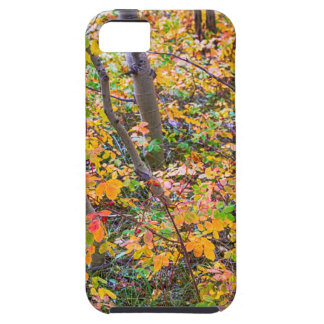 Forest Colors Case For The iPhone 5