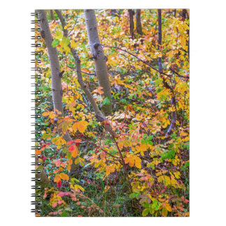 Forest Colors Notebook