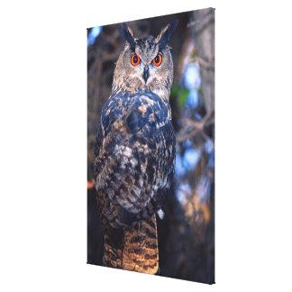 Forest Eagle Owl, Bubo bubo, Native to Eurasia 2 Canvas Print