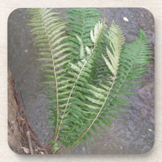 Forest Fern Over Water Coaster