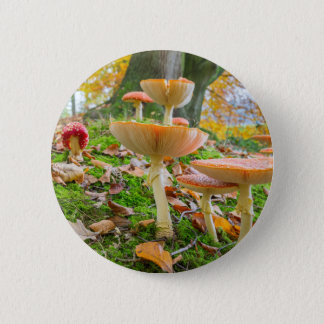 Forest floor with fly agarics and leaves in fall 2 inch round button