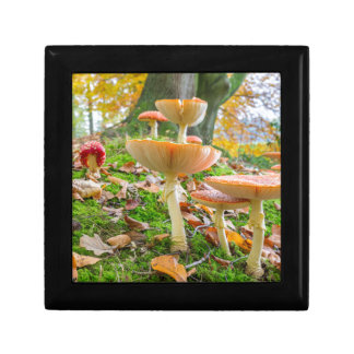 Forest floor with fly agarics and leaves in fall jewelry boxes