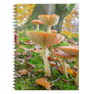 Forest floor with fly agarics and leaves in fall notebooks