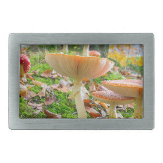 Forest floor with fly agarics and leaves in fall rectangular belt buckles