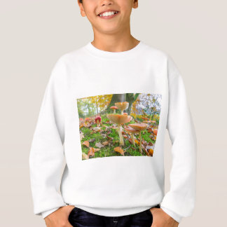 Forest floor with fly agarics and leaves in fall sweatshirt