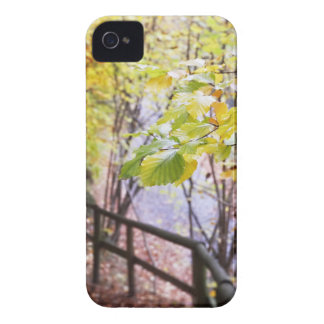 Forest in fall season Case-Mate iPhone 4 case