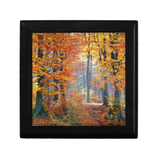 Forest in the Fall Gift Box