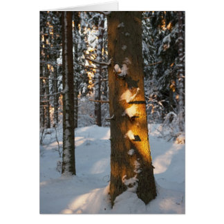 Forest in the winter card