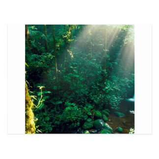 Forest Monteverde Cloud Costa Rica Postcard