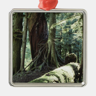 Forest of Cathedral Grove in British Columbia Metal Ornament