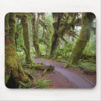 Forest Olympic National Park Mouse Pad