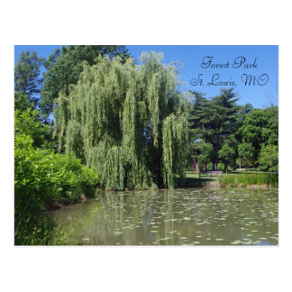 Forest Park Weeping Willow on Pond Postcard