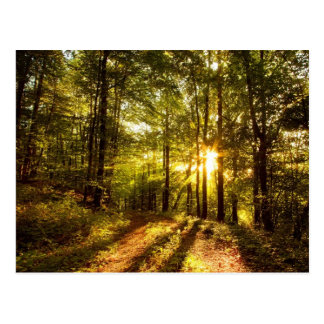 Forest Path - 2 Postcard