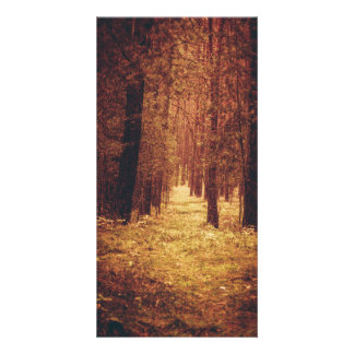 Forest Path... Card