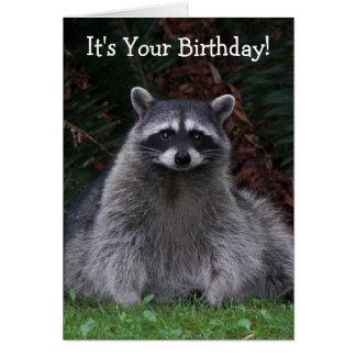 Forest Raccoon Photo Funny Birthday Card