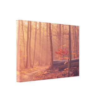 Forest scenery in the morning sunlight canvas print