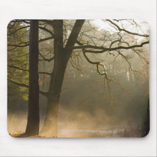 Forest sun rays and low fog mouse pad