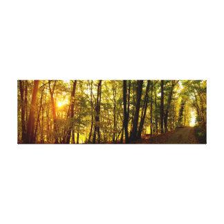 Forest Sunrise Canvas Print