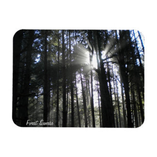 Forest Sunrise Magnet