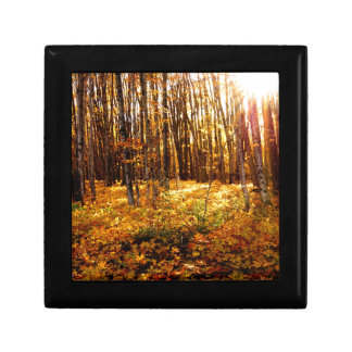 Forest Sunset in the fall Maple Bush Gift Box