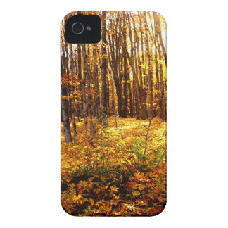 Forest Sunset in the fall Maple Bush iPhone 4 Case-Mate Cases