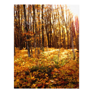 Forest Sunset in the fall Maple Bush Letterhead